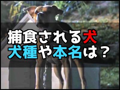 ジュラシックパークロストワールドで食べられる犬がかわいそう?犬種の名前は?